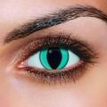 Daily Contact Lenses - AQUA CAT